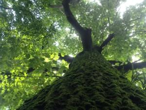 池袋ミント 木